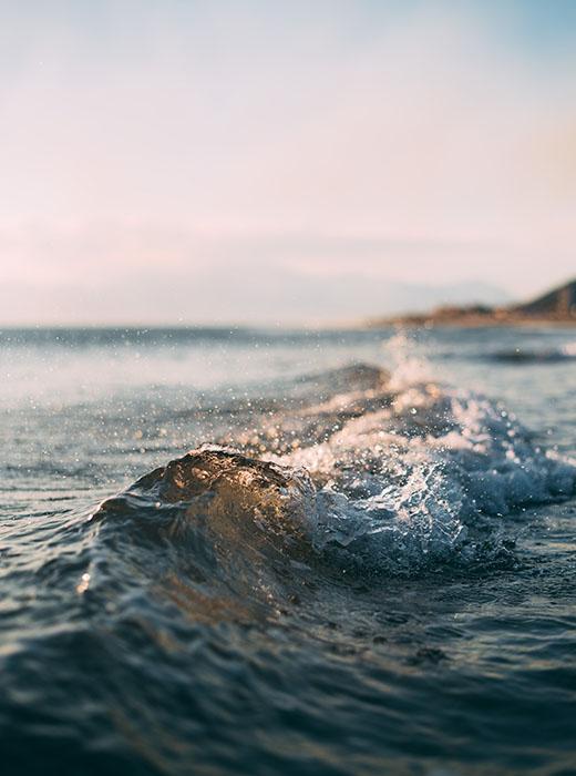 delfinstrategien-susanne-braack-landing-waves